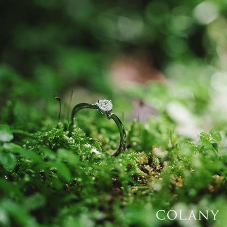 【コラニー】 バラのサムネイル